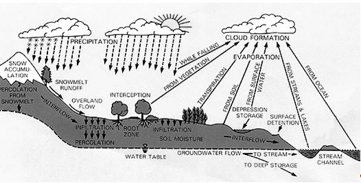 100302 How Microbes Help Ecosystems – Water Cycle Worksheet High School