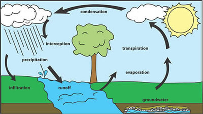 Figure 1: Components of the Water Cycle